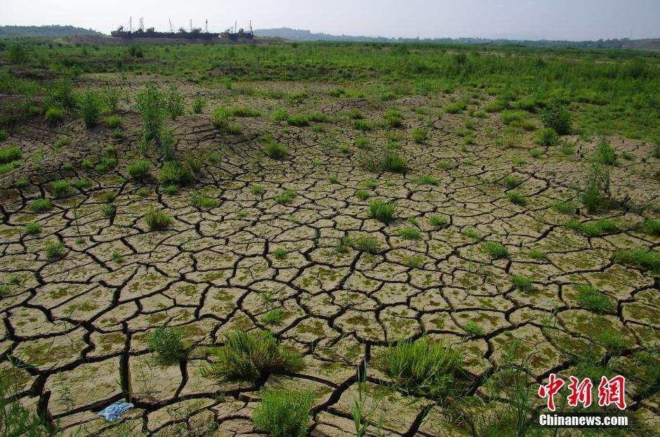 6月28日,由于连日来的干旱,日照水库水位告急,水库水域面积急剧减少,以荻竹涧村以北为界,水库西部只有几个水坑残存着少量的水,以东至水库泄洪闸门处尚存部分水。裸露出来的水库库底已经开始皲裂并长满野草,放眼望去绿油油一片宛如草原,随处可见一些死亡的鱼、河蚌等。中新社发 张磊 摄 图片来源:CNSPHOTO