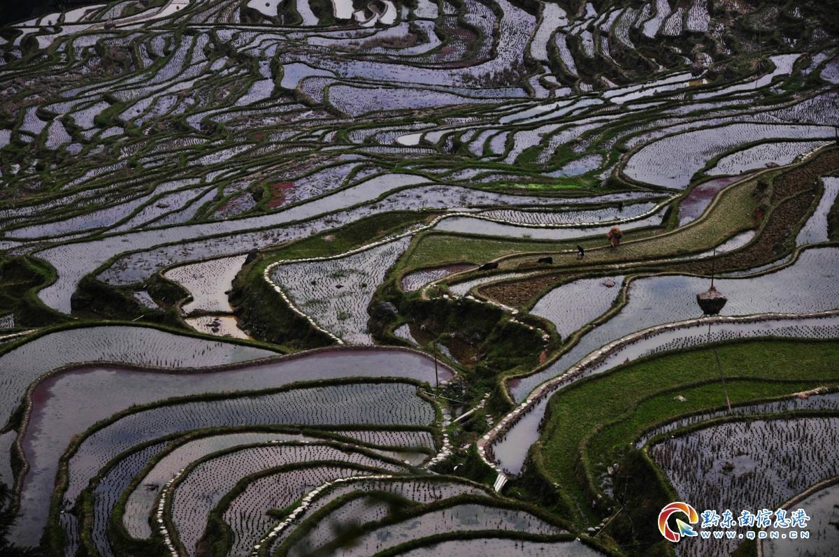 3月27日,从江县加榜乡党扭村农民傍晚在田间回家的身影,似一幅田园农耕曲。