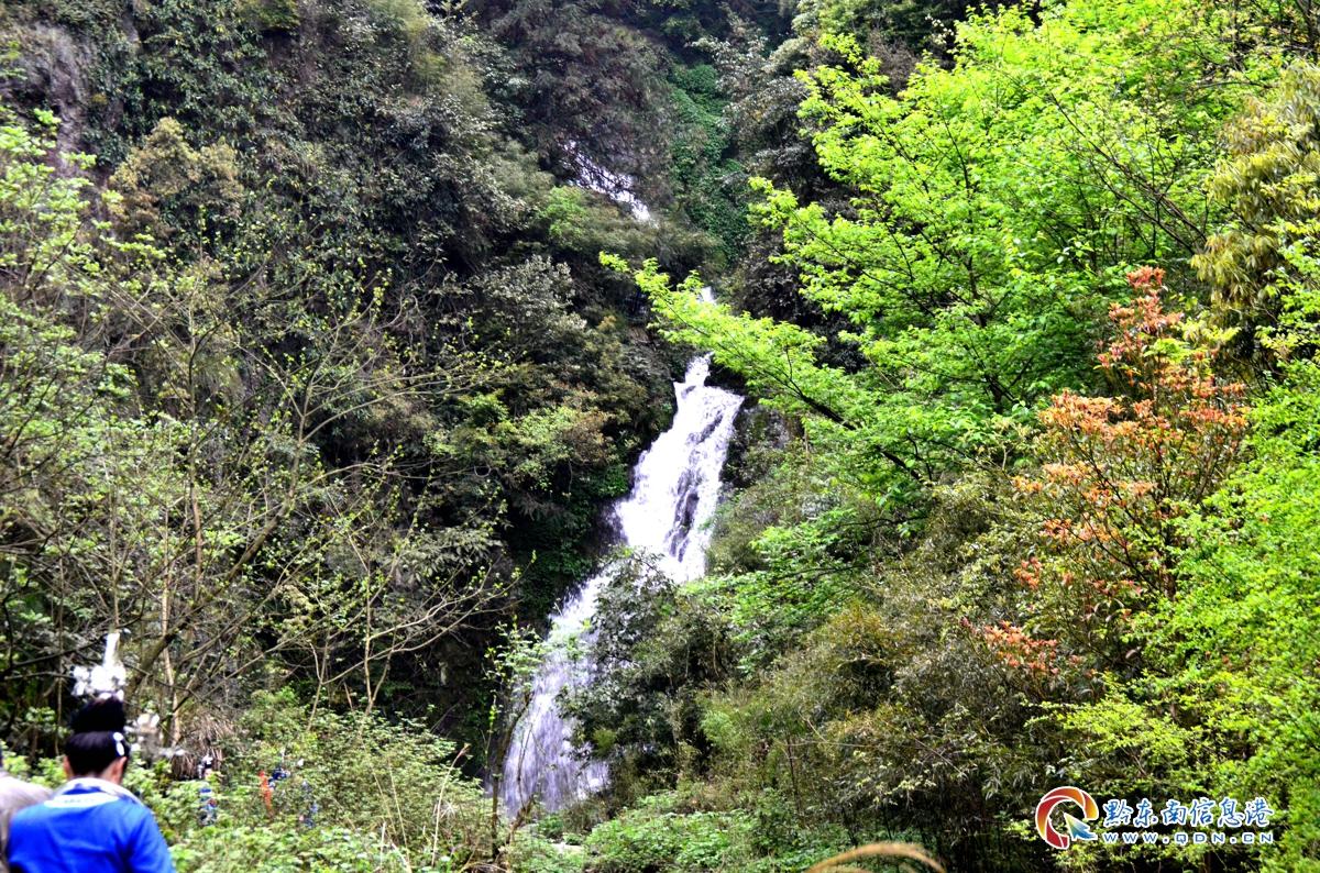 瀑布隐藏树林间