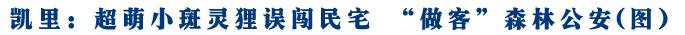 """凯里:超萌小斑灵狸误闯民宅 """"做客""""森林公安(图)"""