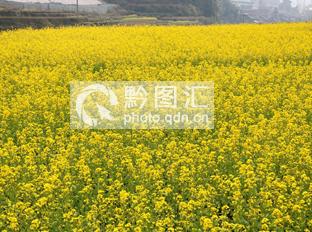 从江:侗乡春天如画卷