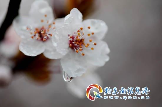 万达旅游小镇暨贵州万达职业技术学院启动仪式在丹寨县举行