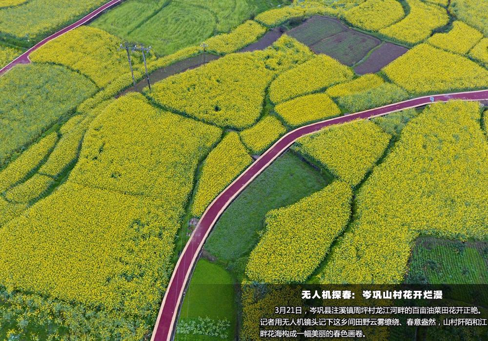 3 月21日,无人机航拍下的贵州省岑巩县注溪镇周坪村的油菜花海犹如大地调色板。新华网 卢志佳 摄